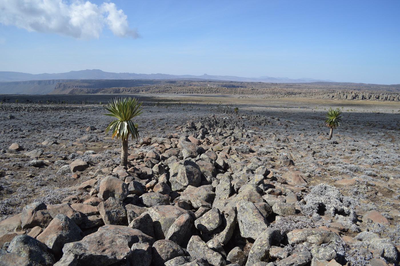 Bale Mountains, Southern Ethiopia.